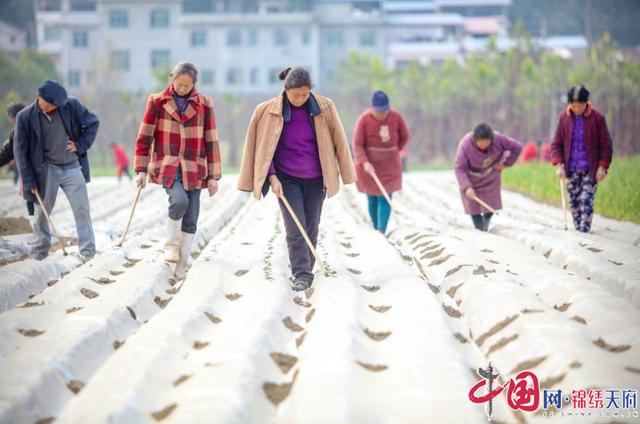 别样的年味!寒冬腊月时节好,射洪市沱牌镇农民播种忙