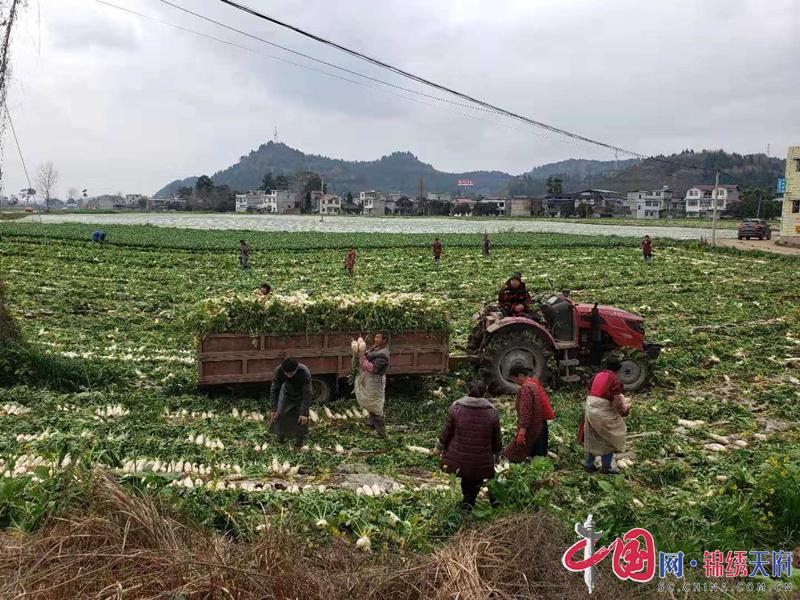 船山区农业农村局:实地调研蔬菜基地 抓牢稳产保供主动权