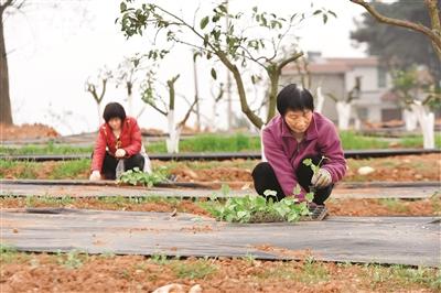合理利用土地 间种农作物