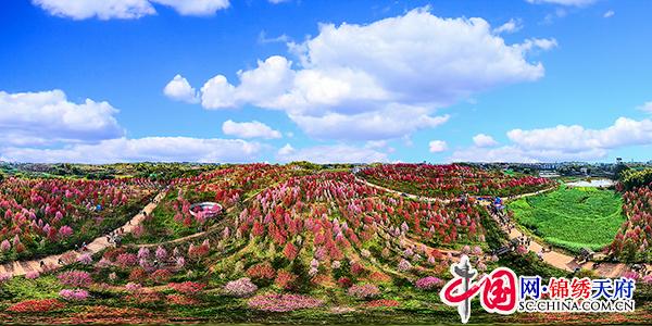 自贡富顺:350亩桃花竞相绽放 吸引众多市民踏青赏花