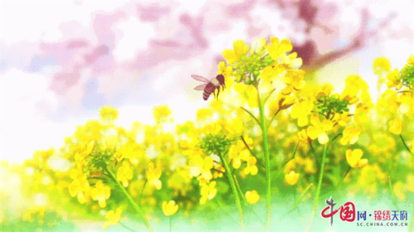 【抗击疫情】阳春三月,咬一口德阳什邡的春味