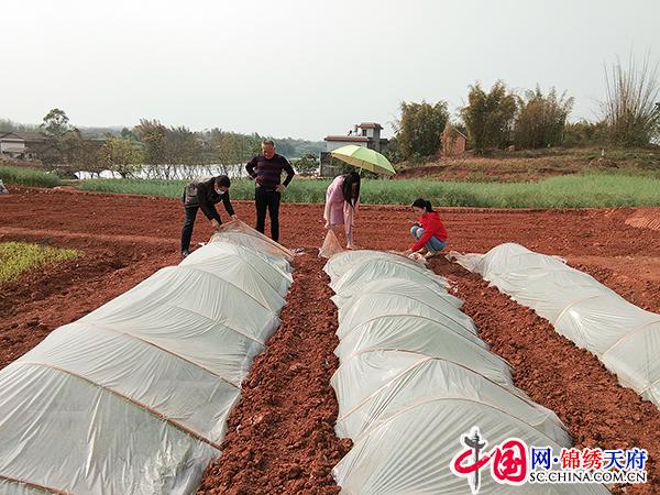自贡沿滩:不误农时促春耕 奋战一线显担当