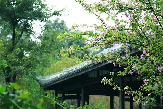 成都杜甫草堂博物馆恢复全面开放