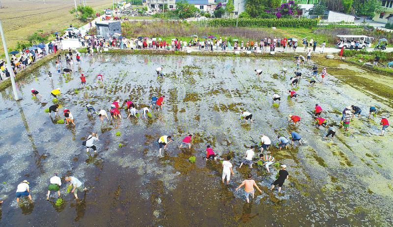 成都青白江区举行第四届插秧节活动
