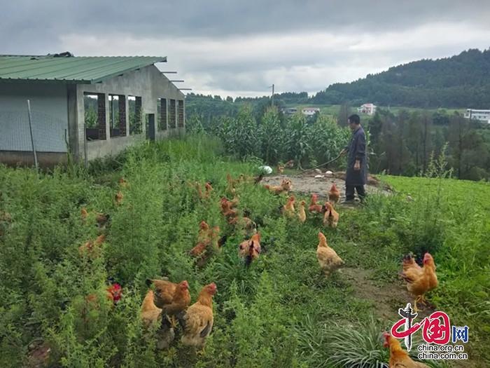 """涪西镇鲤鱼村:发展集体产业 让村民摘掉""""贫困帽"""""""