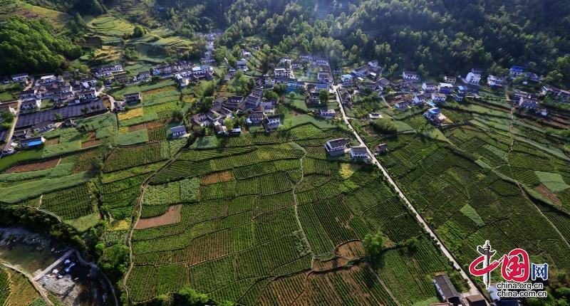 四川青川:农业产业扶贫 巩固提升脱贫质量