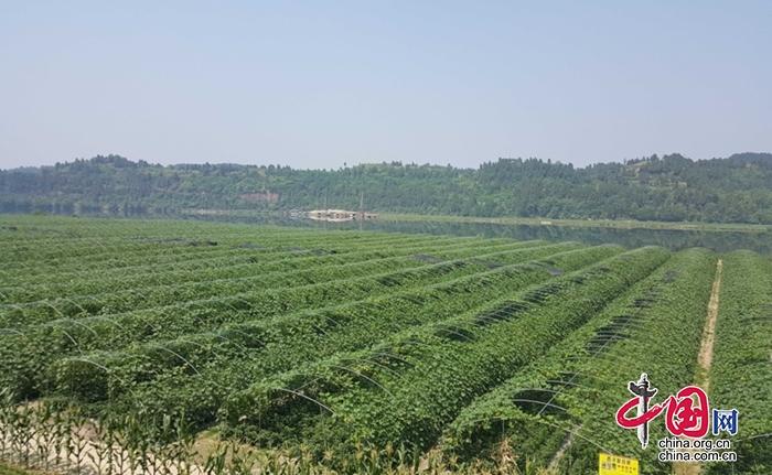 荷叶乡定水村:多种途径助农增收 昔日贫困村如今大变样