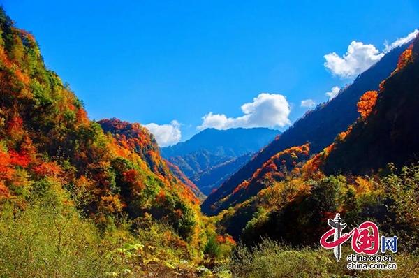 四川青川唐家河第十届红叶节将于10月30日开幕