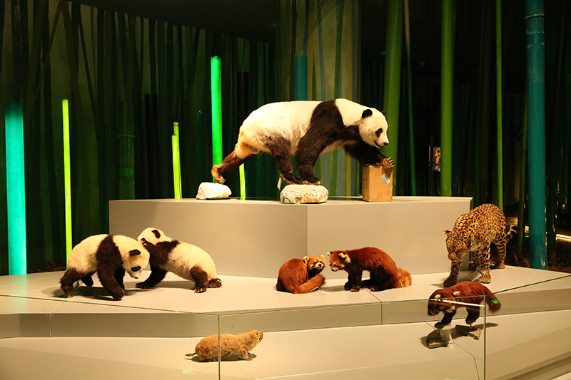 Seven exhibition areas of Chengdu Giant Panda Museum thrown open to first batch of visitors