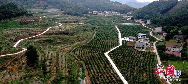 中江大力发展农民专业合作社 促进农业增效农民增收