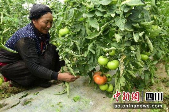 壤塘县:易地搬迁开启美好新生活
