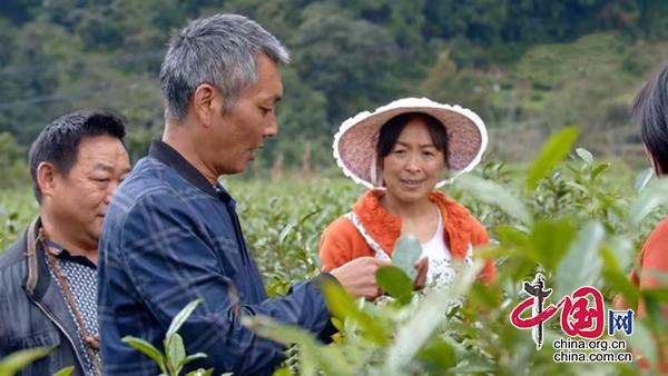 """四川青川老党员罗传树:""""炒""""出先锋""""茶味"""""""