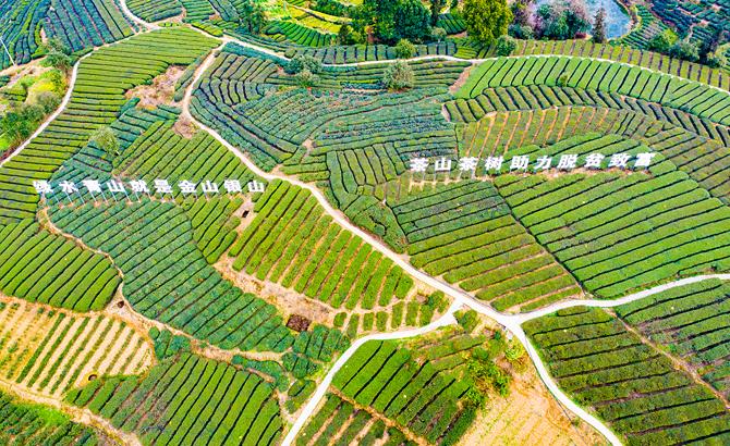 以茶为媒促文旅 自贡市荣县茶旅风情季活动盛大开幕