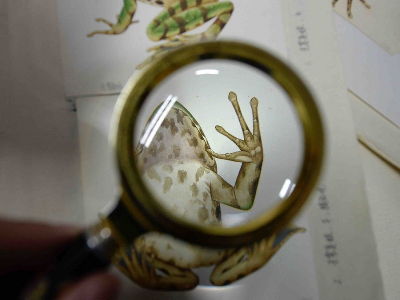 Senior experimentalist draws cute animals for scientific purposes in SW China's Sichuan