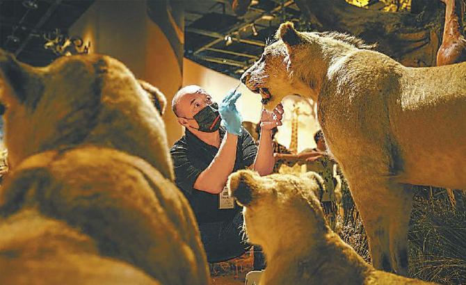 """动物标本师 让博物馆动物""""重获新生"""""""