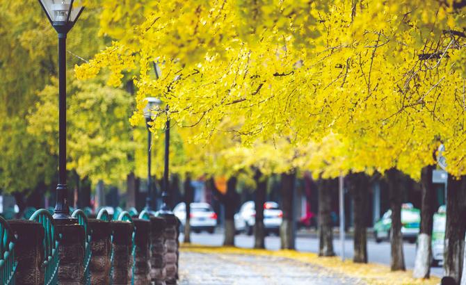 """流光溢彩的""""天府黄""""  绘出公园城市底色"""