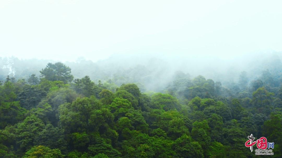 溯流瑜伽 · 心归峨眉 共赴一场森林瑜伽盛会