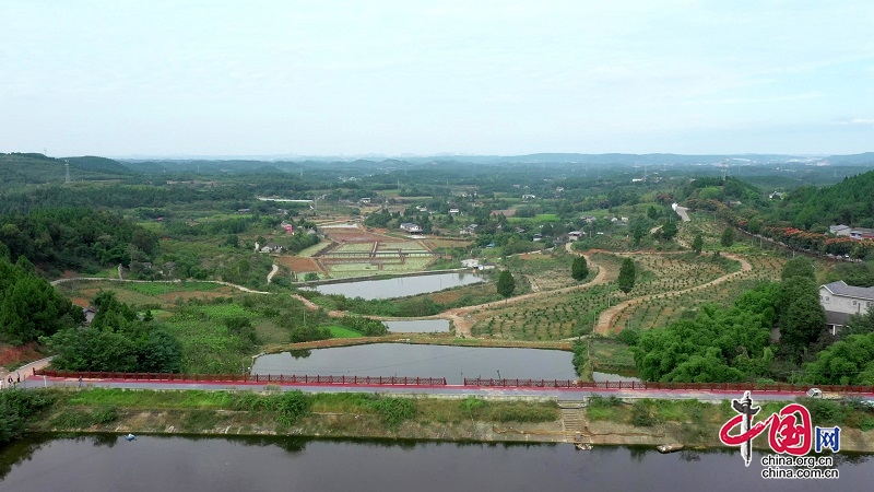 涪城区三清观村:壮大集体经济推动乡村振兴
