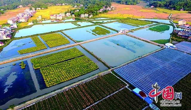 开江县推动稻田经济绿色革命 绘就现代农业多彩画卷