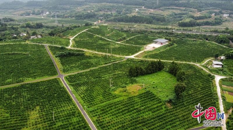 """乡村振兴看四川 发展现代农业园区+电商 南充西充县迈入""""农业高速路"""""""