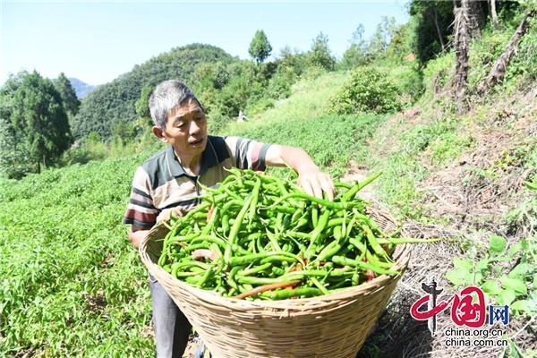"""广元朝天:""""直播+电商""""让农特产品走向全国"""