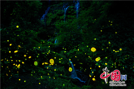 国庆假期去哪玩?来成都邛崃打卡天台山元气森林 看萤火虫漫天飞舞
