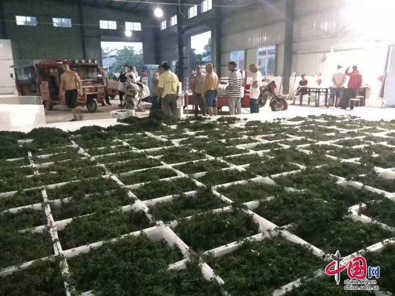 """罗江:""""农联""""聚力强农带农 小农户增收不用愁"""
