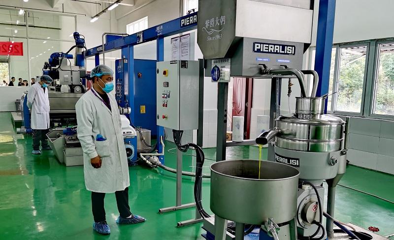 广元新橄榄油开榨 今年仅有600吨