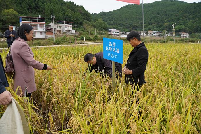 射洪市召开旱稻品种比较试验成果现场鉴定会