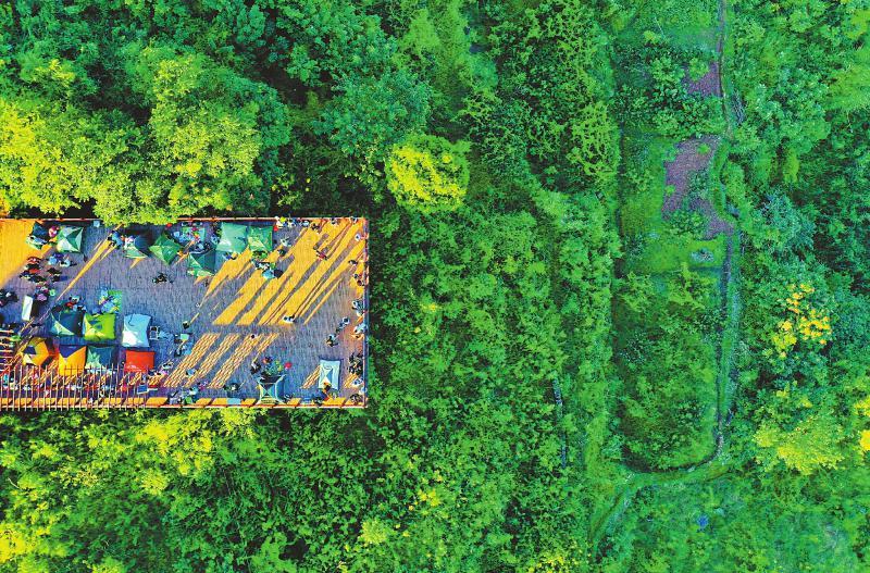 成都:义务植树,40 年种了 8 亿多株