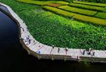 绵阳新增3家省级示范农业主题公园