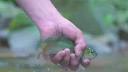 别找我了,我回芦山养鱼了