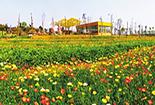 游仙:深入推进农村人居环境整治行动绘就乡村新图景